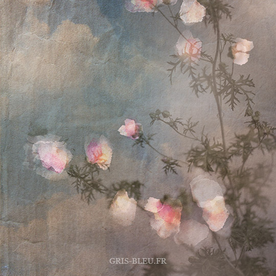 Fleurs de mauves